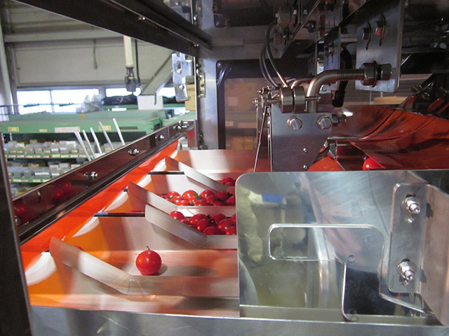 Cherry Tomato Multihead Weigher